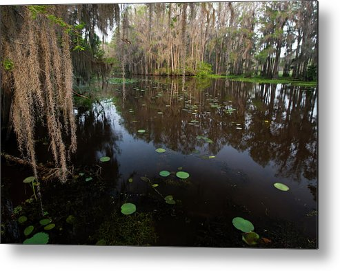 Bald Cypress Metal Print featuring the photograph Caddo Lake, Texas's Largest Natural Lake by Larry Ditto