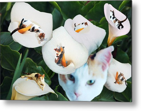 Cat Metal Print featuring the digital art Cala In Callas by Lisa Yount