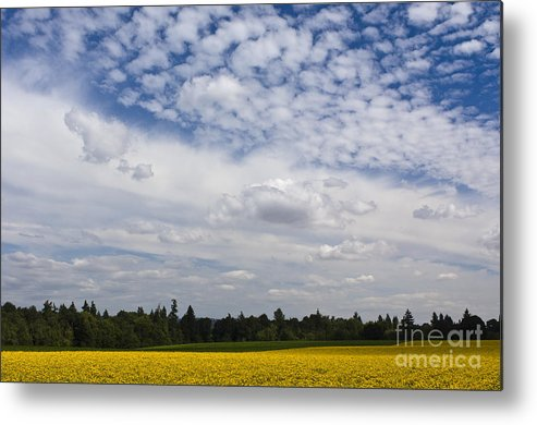 California Poppies Metal Print featuring the photograph California Poppies by John Shaw