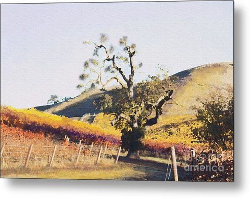 California Wine Country Metal Print featuring the painting California Vineyard Series Oaks In The Vineyard by Artist and Photographer Laura Wrede