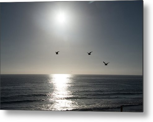 California Metal Print featuring the photograph California Seagulls Where Are They Headed by JG Thompson