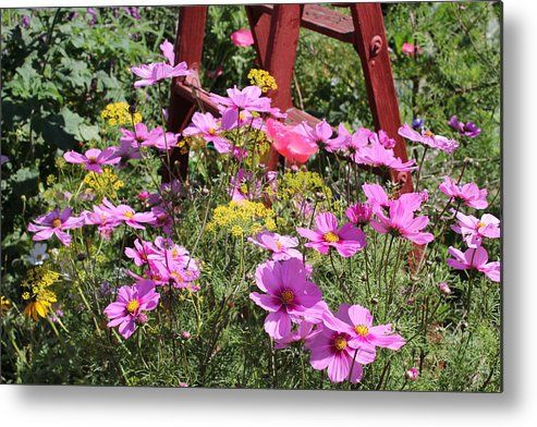 Landscapes Metal Print featuring the photograph Cambria Garden 2 by Douglas Miller