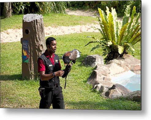 Asia Metal Print featuring the digital art Cartoon - A Trainer And A Large Bird Of Prey At A Show Inside The Jurong Bird Park by Ashish Agarwal