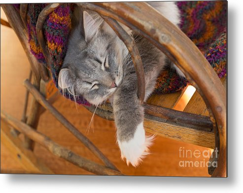 Cat Metal Print featuring the photograph Cat Asleep In A Wooden Rocking Chair by Louise Heusinkveld