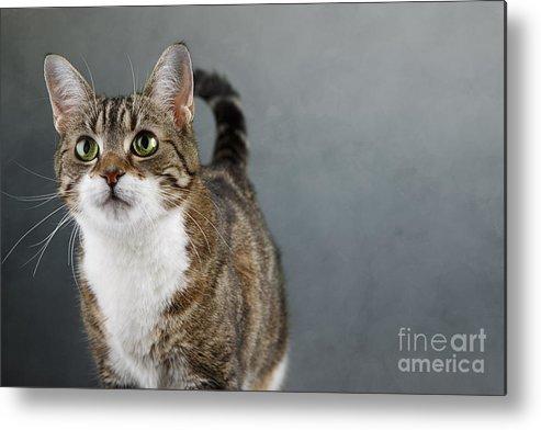 Cat Metal Print featuring the photograph Cat Portrait by Nailia Schwarz