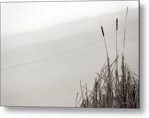 Winter Metal Print featuring the photograph Cat Tails In Winter by Jim Vance