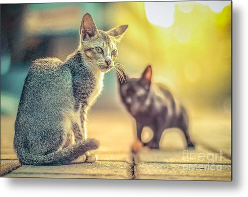 Food Metal Print featuring the photograph cat by Nuriyah