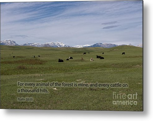 Cattle Metal Print featuring the photograph Cattle And Bible Verse by David Arment