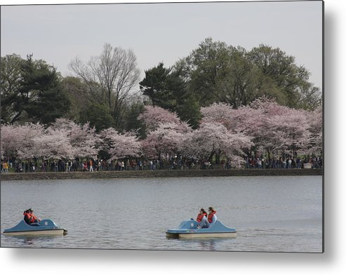 Cherry Metal Print featuring the photograph Cherry Blossoms - Washington Dc - 011315 by DC Photographer