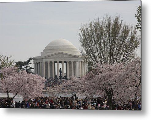 Cherry Metal Print featuring the photograph Cherry Blossoms With Jefferson Memorial - Washington Dc - 01132 by DC Photographer