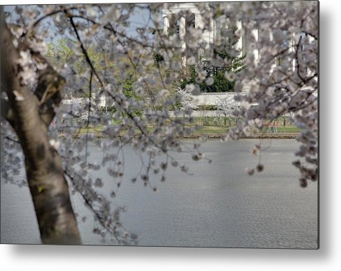 America Metal Print featuring the photograph Cherry Blossoms With Jefferson Memorial - Washington Dc - 011336 by DC Photographer