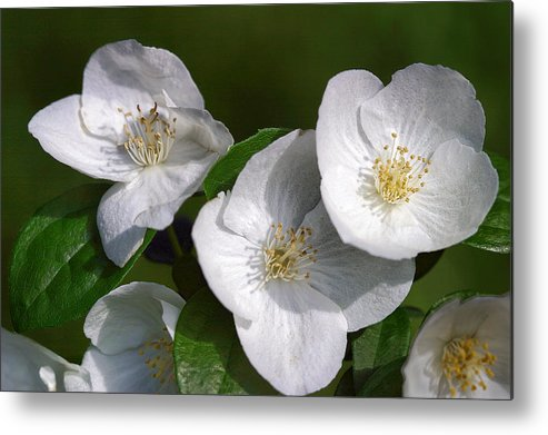 Floral Metal Print featuring the photograph Close Trio Of White Flowers by Linda Phelps