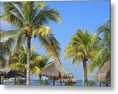 Tropical Metal Print featuring the photograph Coconut Palm Forest by Charline Xia
