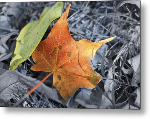 Color Metal Print featuring the photograph Color by Steve Schwarz