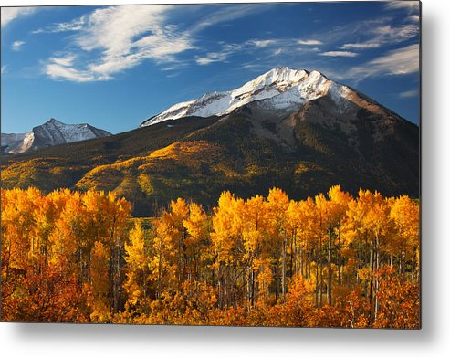 Aspen Metal Print featuring the photograph Colorado Gold by Darren White