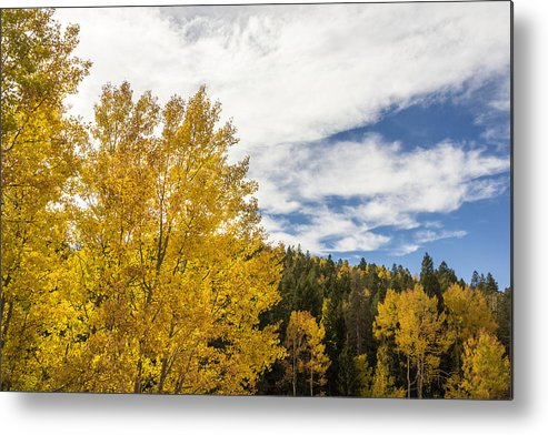 Colorful Colorado Turning Aspens Mountain Landscape Scene Metal Print featuring the photograph Colorful Changing Aspens - Divide Colorado by Brian Harig