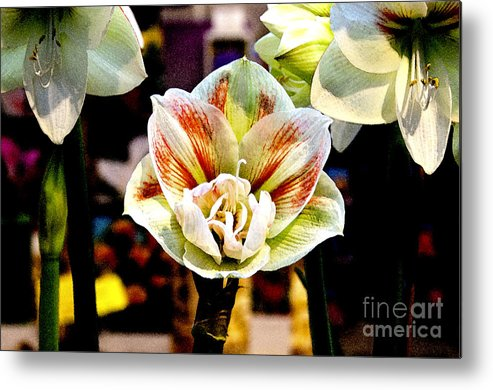 Flower Metal Print featuring the digital art Colorful White by Pravine Chester