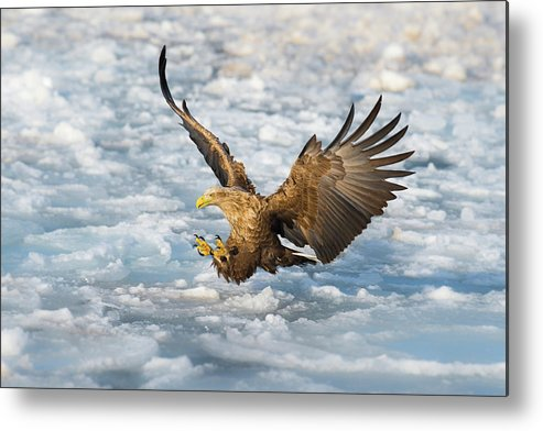 Nature Metal Print featuring the photograph Coming by C. Mei