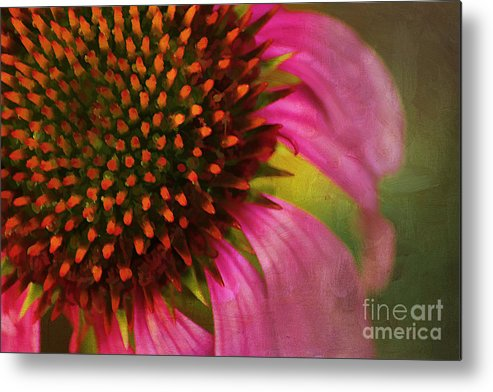 Painterly Metal Print featuring the photograph Coneflower by Darren Fisher