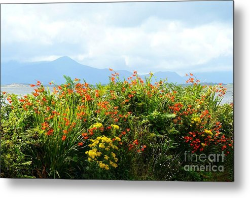 Dingle Metal Print featuring the photograph Coppertips On The Dingle Peninsula by Gisela Scheffbuch