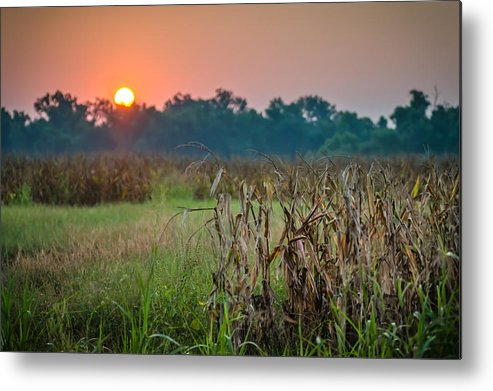 Cornfield Metal Print featuring the photograph Cornfield Morning by James Barber