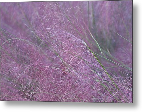 Pink Muhly Grass Metal Print featuring the photograph Cotton Candy Pink by Linda Dyer Kennedy