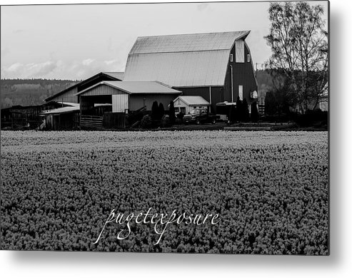 Fields Metal Print featuring the photograph Countryside Tulip Farm by Puget Exposure
