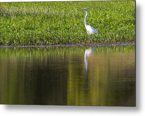 Bird Metal Print featuring the photograph Crane by Pete OConnor