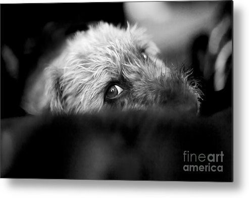 Dog Metal Print featuring the photograph Cute Pup Sneek A Peek by Natalie Kinnear