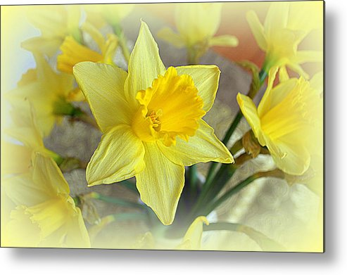 Daffodil Metal Print featuring the photograph Daffodil by Bishopston Fine Art