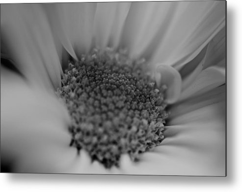 Flower Metal Print featuring the photograph Daisy by Jean-Pierre Mouzon