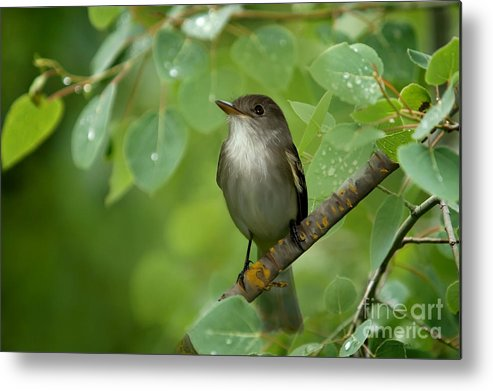 Day Dreamer Metal Print featuring the photograph Day Dreamer by Beve Brown-Clark Photography