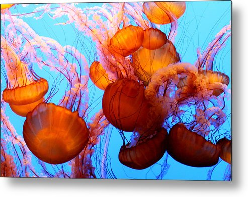 Jellyfish Metal Print featuring the photograph Deadly Beauty by Roger Parker