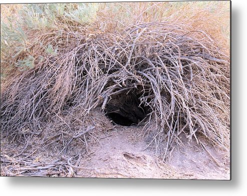 Metal Print featuring the photograph Den In Death Valley by G Berry