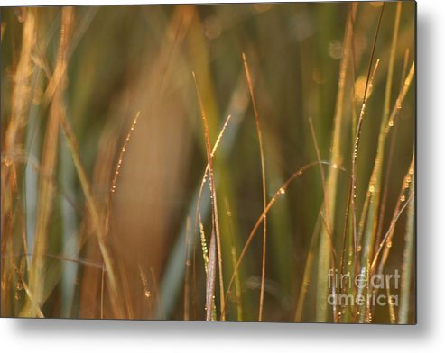 Dew Metal Print featuring the photograph Dewy Grasses by Nadine Rippelmeyer