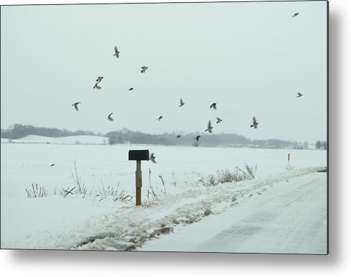 Winter Metal Print featuring the photograph Disturbing The Winter Foragers by Julie Dant