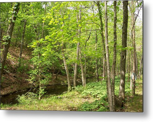 Metal Print featuring the photograph Dogwood Canyon by Pat Follett