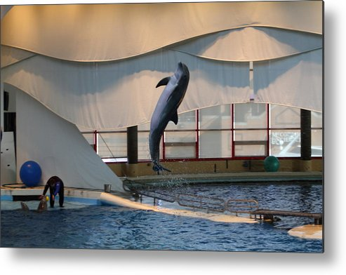 Inner Metal Print featuring the photograph Dolphin Show - National Aquarium In Baltimore Md - 121255 by DC Photographer