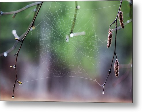 Web Metal Print featuring the photograph Dream Catcher by Aaron Aldrich