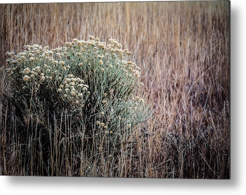 Colorado Metal Print featuring the photograph Dried Wildflowers by Karen Saunders