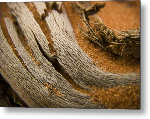 3scape Photos Metal Print featuring the photograph Driftwood 2 by Adam Romanowicz