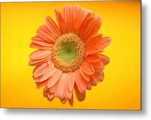 Flower Metal Print featuring the photograph Dscn945811c by Kimberlie Gerner