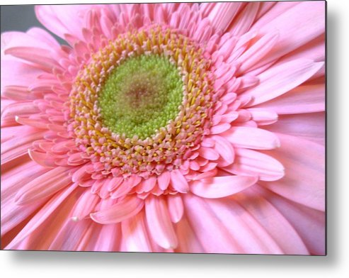 Flower Metal Print featuring the photograph Dscn961441c by Kimberlie Gerner