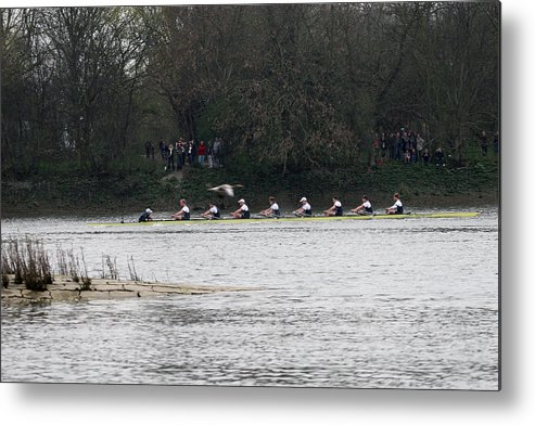 Oxford Metal Print featuring the photograph Duck Chasing The Boat Race by Tim Senior