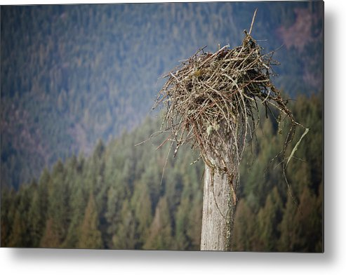 Absence Metal Print featuring the photograph Eagles Nest by Christopher Kimmel
