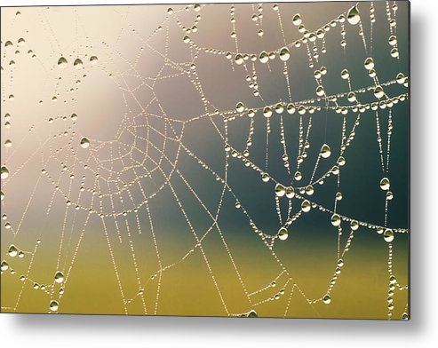 Background Metal Print featuring the photograph Early Morning by David Davis