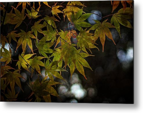 Trees Metal Print featuring the photograph Earthen Leaves by Simone Ochrym