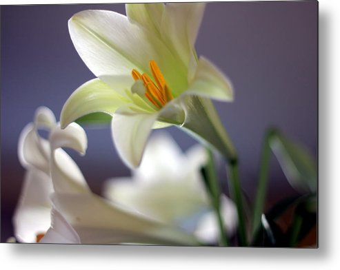 Easter Metal Print featuring the photograph Easter Lilly by Randy Wehner Photography