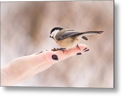 Bird Metal Print featuring the photograph Eating Out Of The Palm Of Her Hand by Stephen Just