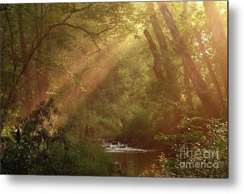 Sunlight Metal Print featuring the photograph Eden...maybe. by Douglas Stucky